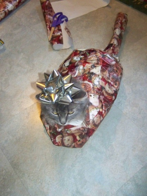 Christmas Wrapped Cat